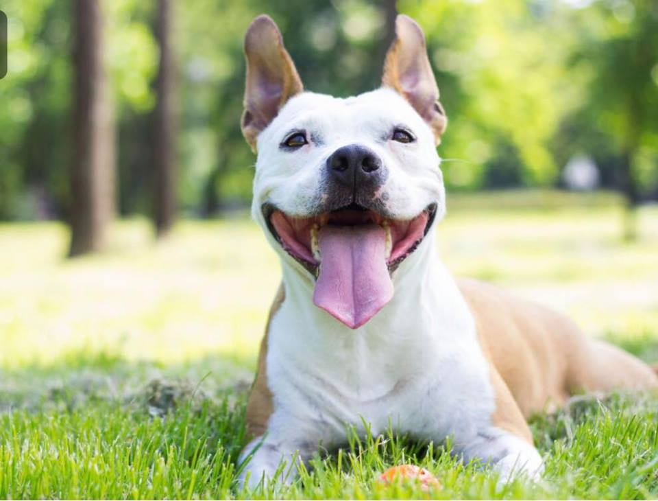 Pet Sitting and Dog Walking Service in Londonderry and Derry NH